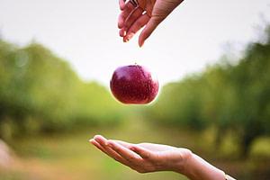 Fallender Apfel als Erklärung der Schwerkraft