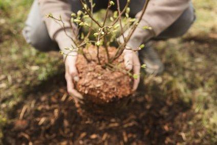 Systematik beim Pflanzen wie Systematik in der Rolfing 10er Serie Start