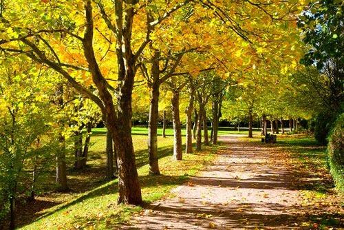 Gehen Sie nach einer Rolfing-Behandlung spazieren