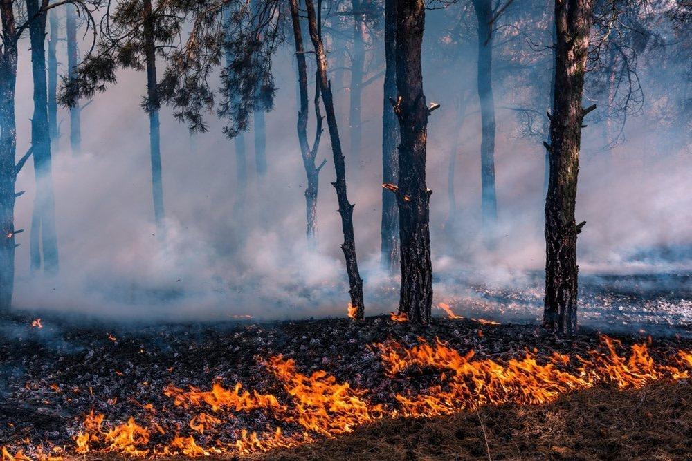 Entzündungen reduzieren - beweglich altern - geistig fit bleiben - Ein schwelender Waldbrand als Symbol