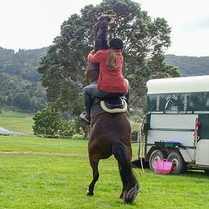 Vicky Wilson au steigendem Pferd