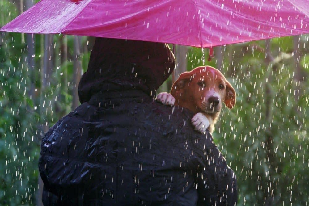Hundewelpe unter einem Regenschirm in Sicherheit. Neugieriger Blick auf den Betrachter.