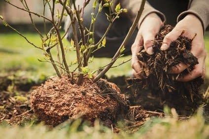 Systematik beim Pflanzen wie Systematik in der Rolfing 10er Serie