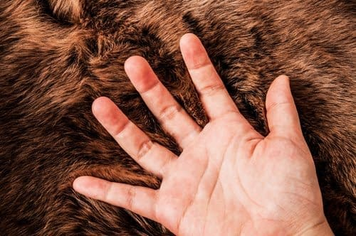 Geöffnete Hand auf einem Fell. Übung um Schmerzen bei Karpaltunnelsyndrom zu behandeln.