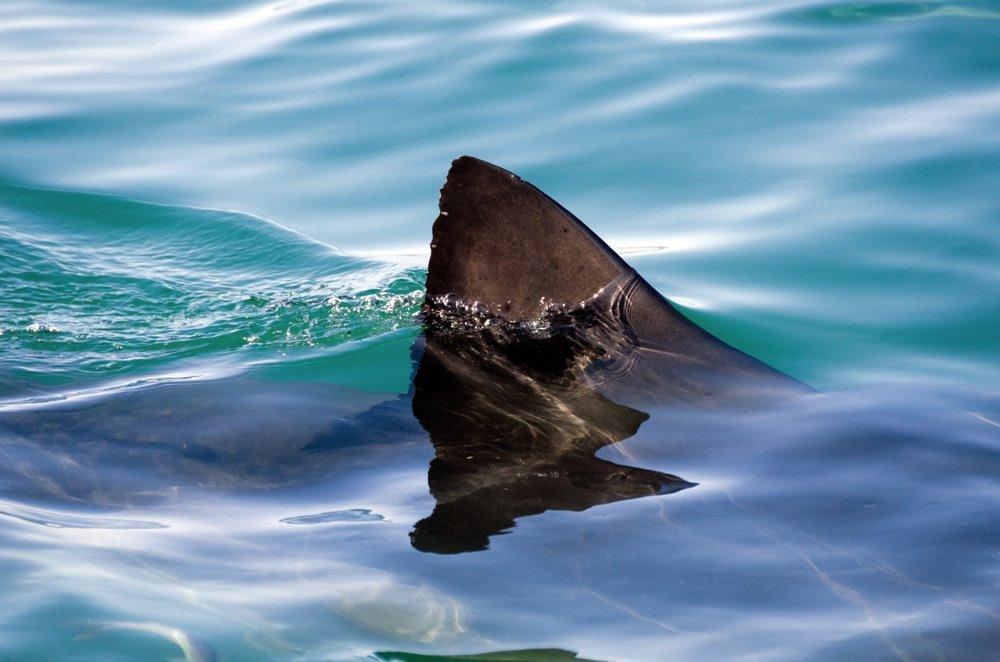 Entzündungen reduzieren - unsere Körperabwehr reagiert bereits Teilerkennung. So wie wir nur die Finne eines Hais für die Erkennung eines ganzen Hais brauchen.